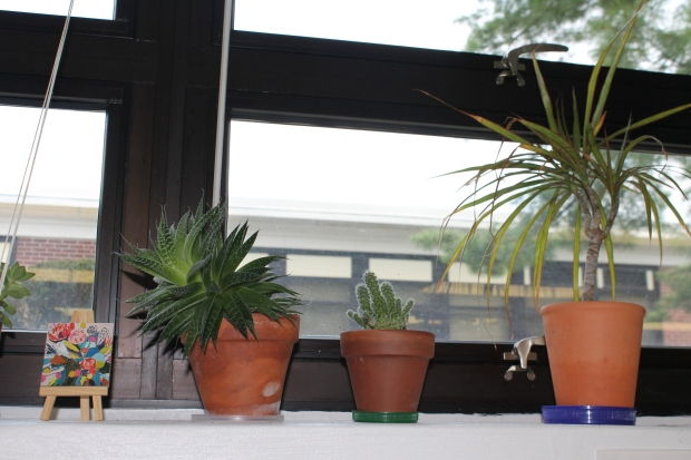 plants cactus